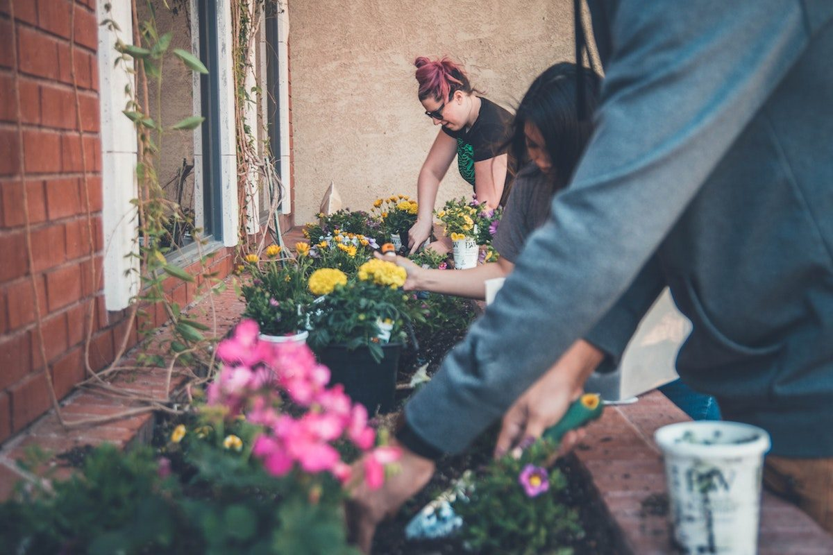 Plants, queerness and mental health: The joy of growth